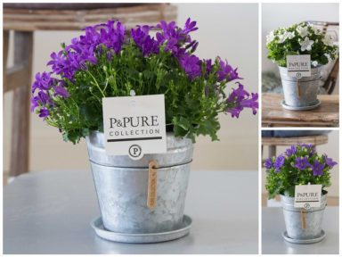 L176-3700-Campanula-p11-mix-in-zinc-pot-Louise-II