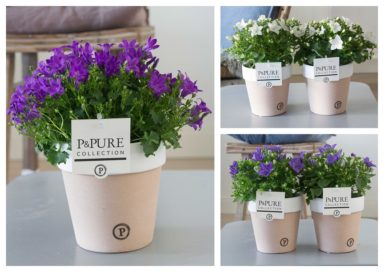 L188-2200-Campanula-p11-mix-in-Pure-Terra-Cotta-II-assorti
