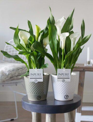 PC02-406-Zantedeschia-p12-white-in-Expression-ceramics-green_white
