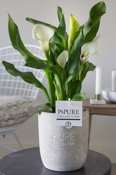 PC02-407-Zantedeschia-p12-white-in-Jade-2-ceramics