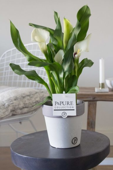 PC02-408-Zantedeschia-p12-white-in-Clay-ceramics-2-grey