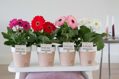 T12-PC05-007-Gerbera-p12-mix-in-Expression-Ceramics-ass.-pink_red