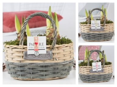 PC02-014x-Amaryllis-p12-mix-in-Fieldbasket-4