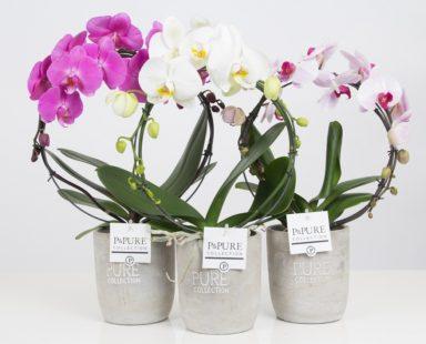 PBMDPJA-Phalaenopsis-p12-boog-mix-in-Jade-II-ceramics