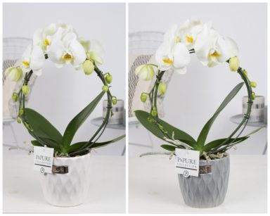 PBWDPB2-Phalaenopsis-p12-boog-wit-in-Bijoux-II-ceramics-white-and-grey