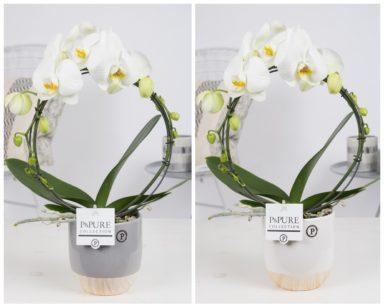 PBWDPE-Phalaenopsis-p12-boog-wit-in-Emily-ceramics-white_grey