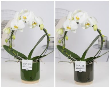 PBWDPJUG-Phalaenopsis-p12-boog-white-in-Julia-ceremics-green-ass.