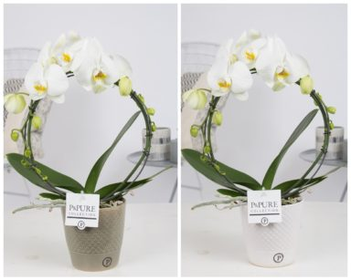 PBWDPX2-Phalaenopsis-p12-boog-wit-in-Expression-ceramics-white_green