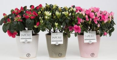 PC15-143-Azalea-p12-mix-in-Expression-ceramics-assorti