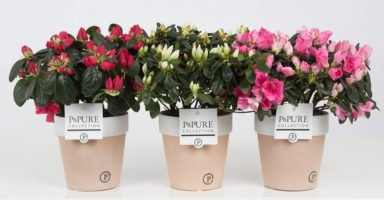 PC15-153-Azalea-p12-mix-in-Pure-Terra-Cotta