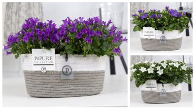 L174-0800-Campanula-p11-mix-in-Fieldbasket