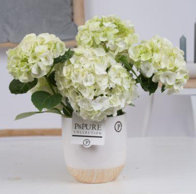 PC12-050-Hydrangea-white-p12-in-Emily-ceramics