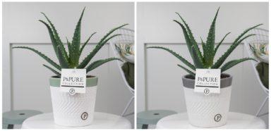ABORVALERIE-Aloe-Aborescens-in-Valerie-ceramics