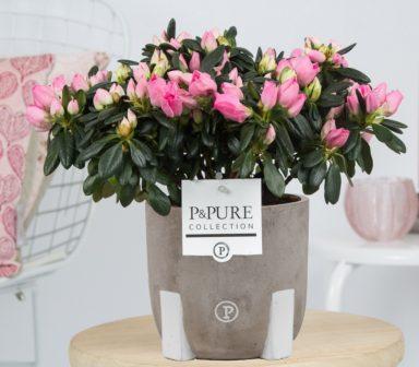 PC15-12-Azalea-p12-pink-in-Jade-Ceramics-assorti_2