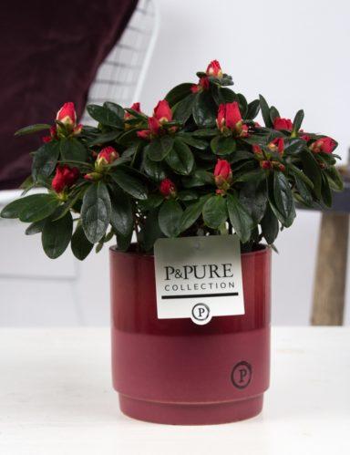 PC1558-Azalea-p12-red-in-Juliette-ceramics-red