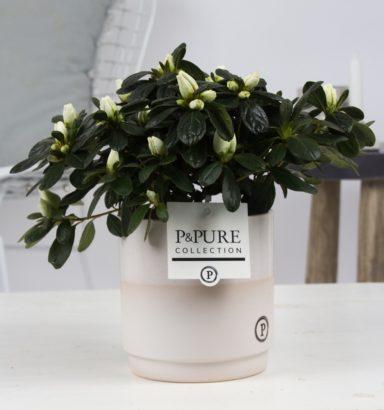 PC15-160-Azalea-p12-white-in-Juliette-ceramics