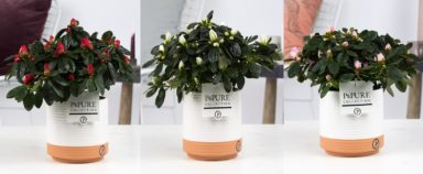 PC151-Azalea-p12-mix-in-Milou-ceramics