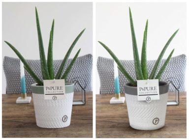 VERAVALERIE-Aloe-Vera-p12-in-Valerie-ceramics