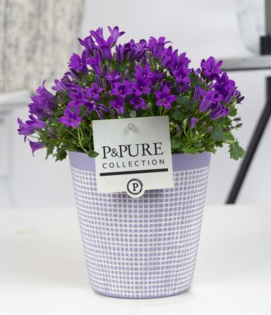 L008-0300-Campanula-p11-Porto-in-Pure-Clay-3