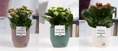 PC02-290-Kalanchoe-p12-mix-in-Eline-cer.