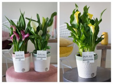PC02-455-Zantedeschia-p12-mix-in-Valerie-ceramics-ass.