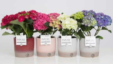 PC12-133-Hydrangea-p12-mix-in-Lucille-ceramics