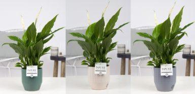 PC15-144-Spathiphyllum-p12-in-eline-ceramics-assorti