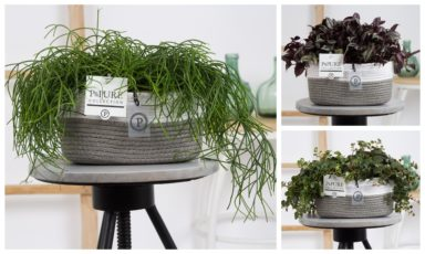 PUREGREENFIEL-Rhipsalis-Tradescantia-Sedum-x2-in-Pure-Fieldbasket