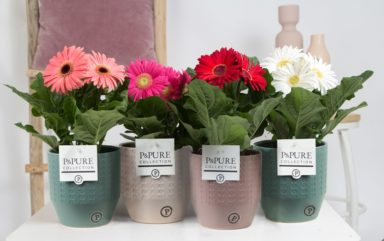 T12-PC05-037-Gerbera-p12-mix-in-Eline-ceramics-ass.