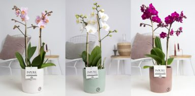PC0801MI-Multiflora-in-Sophie-ceramics