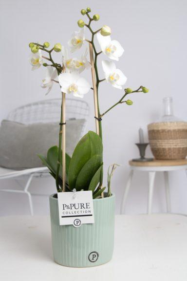 PC0802WH-Multiflora-white-in-Sophie-ceramics