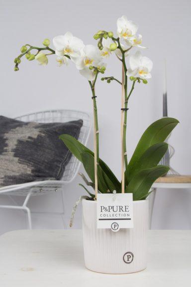 PC0802WH-Multiflora-in-Sophie-ceramics