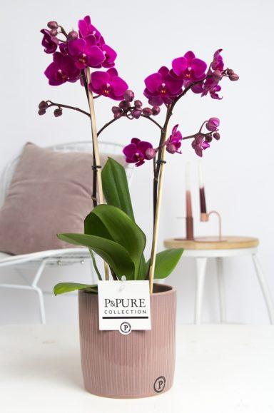 PC0803PU-Multiflora-purple-in-Sophie-ceramics