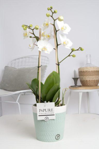 PC1002WH-Multiflora-white-in-Valerie-ceramics-green