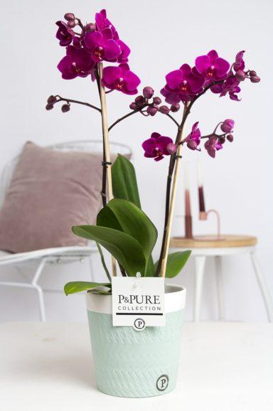 PC1003PU-Multiflora-purple-in-Valerie-ceramics-green