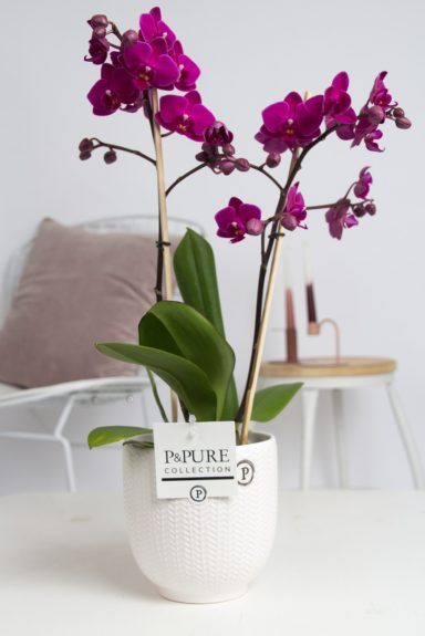PC1103PU-Multiflora-purple-in-Liv-ceramics