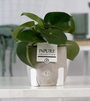 PC02-1006-Peperonia-Raindrop-p12-in-Jade